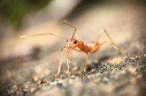 Ameisenköder Test und Erfahrungen