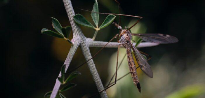 Elektrischer Insektenvernichter Test und Erfahrungen