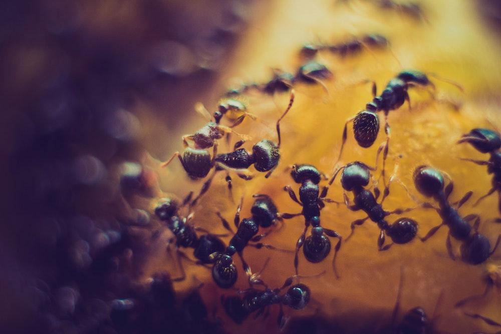 Essig gegen Ameisen als Hausmittel
