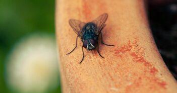 Essigfliegenfalle Test und Tipps