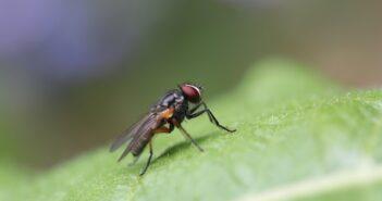 Fliegenfalle selber bauen Anleitung