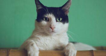 Fremde Katzen vertreiben Tipps und Ratgeber
