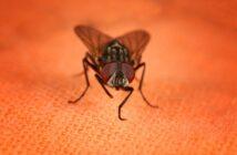 Fruchtfliegen Bekämpfen ungezieferabwehr ratgerber hilfe schädlingsbekämpfung