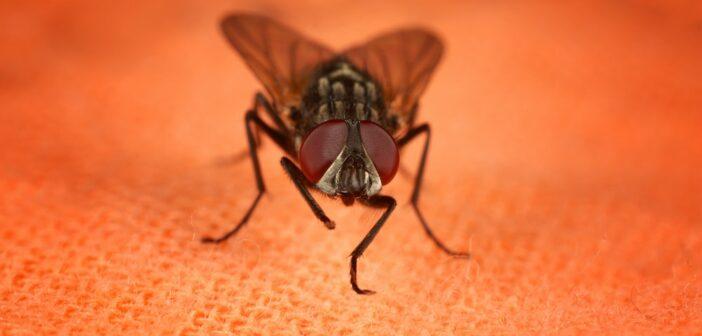 Die besten Fruchtfliegen bekämpfen Tipps