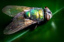 Tipps und Hausmittel gegen Fliegen