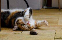 Ist Katzen vertreiben illegal?