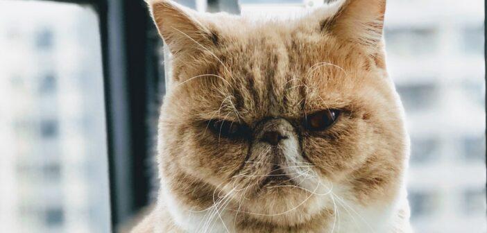 Katzenfalle Test und Erfahrungen