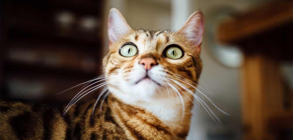 Unsere Katzenschreck Empfehlungen und Testberichte
