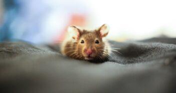 So können Sie Mäuse im Garten vertreiben