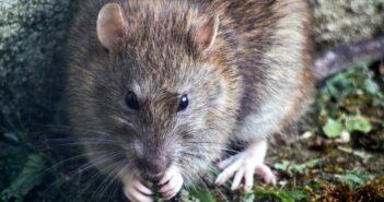 Die besten Mäuse vertreiben Tipps