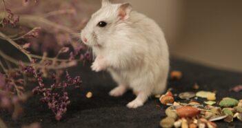 Unser Mäusegift Test und Erfahrungen