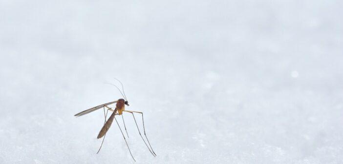 Die besten Mücken vertreiben Tipps