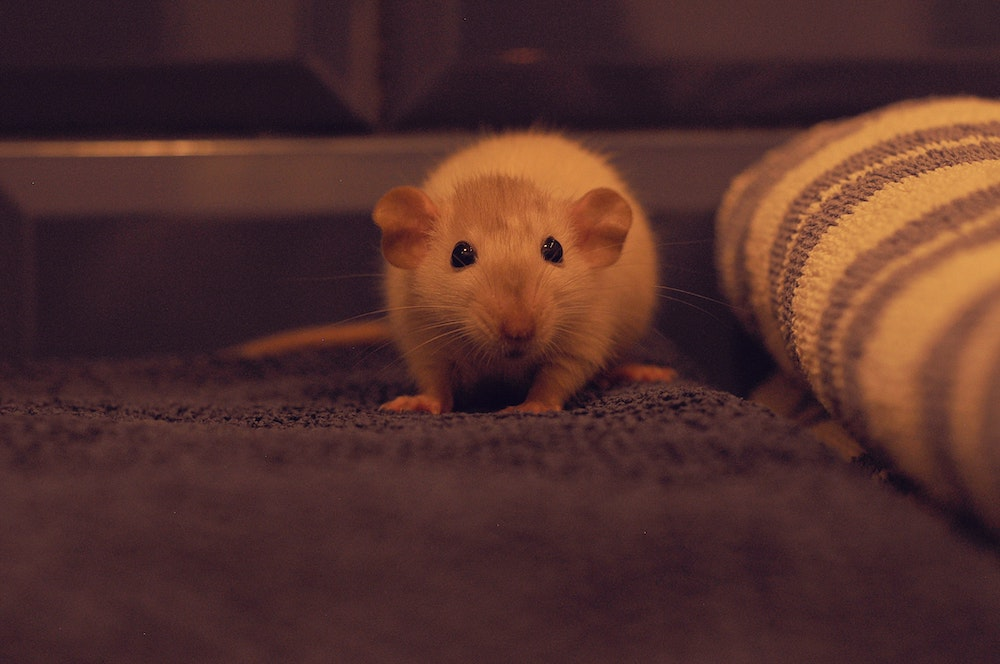 Mausefalle Test I Die Besten Fallen Fur Mause