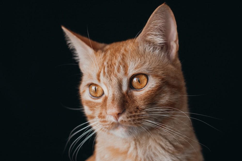 PestBye Katzenschreck Test und Erfahrungen