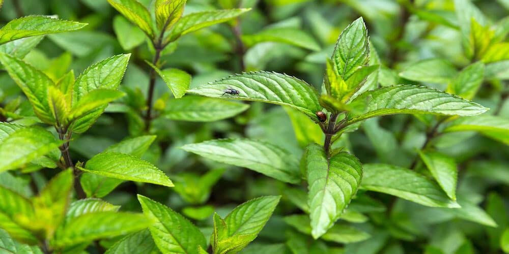 Pflanzen Gegen Katzen Im Garten I Giftige Ungiftige Pflanzen