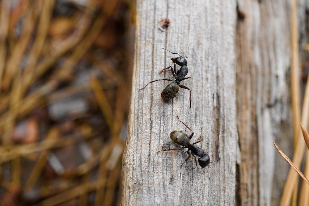 Tipps gegen Ameisen welche helfen