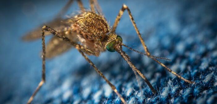 Was hilft gegen Mücken im Garten