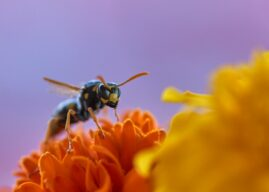 Was hilft gegen Wespen? Wespen bekämpfen Tipps