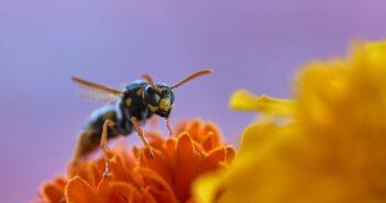 Was hilft gegen Wespen Tipps und Ratgeber