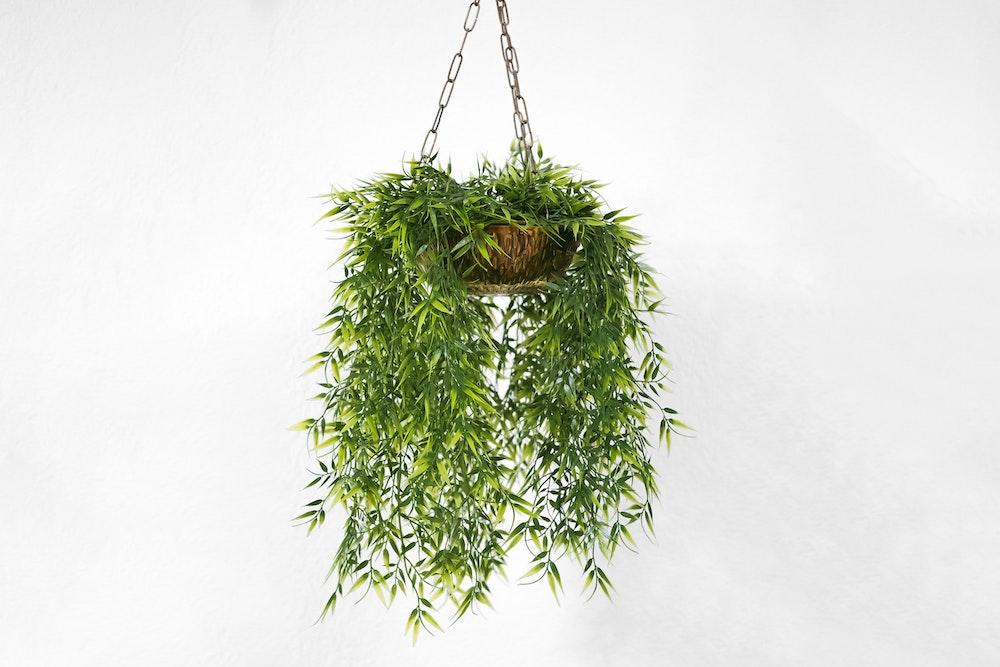 pflanzen gegen m cken i schnaken mit pflanzen abwehren. Black Bedroom Furniture Sets. Home Design Ideas