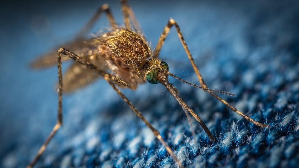Hausmittel gegen Mücken: Zitronen und Nelken