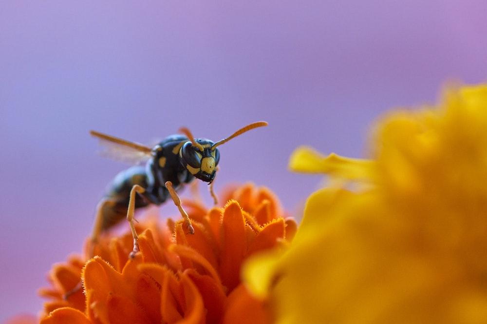 Wespenspray Test - Anwendung mit Bedacht